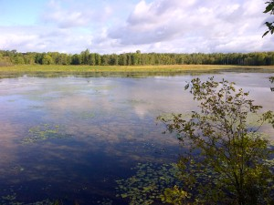 Bannister Lake Conservation Area, Cambridge