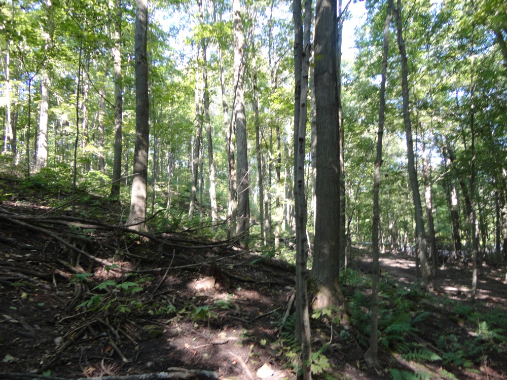 Hilly terrain makes Dryden Tract a great place for hiking.