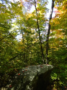A hike in Sundridge, Ontario.