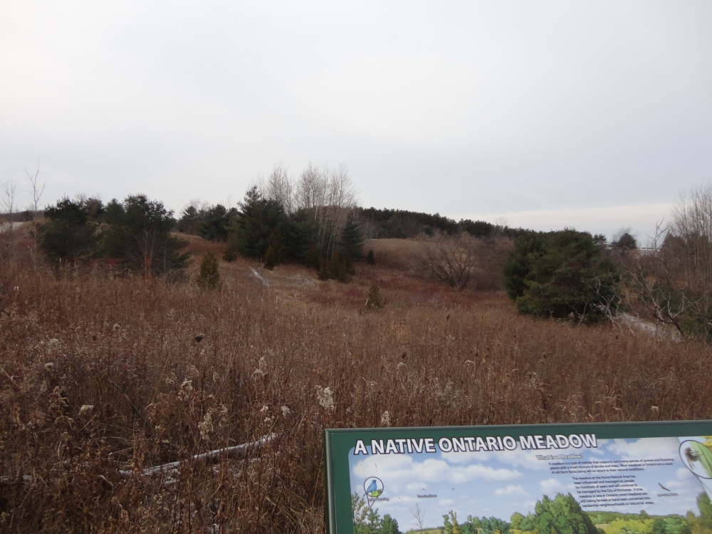 "An ""Ontario meadow project"" sign highlights native species in the area."