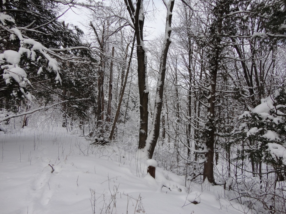 A hike in a snowy wood.