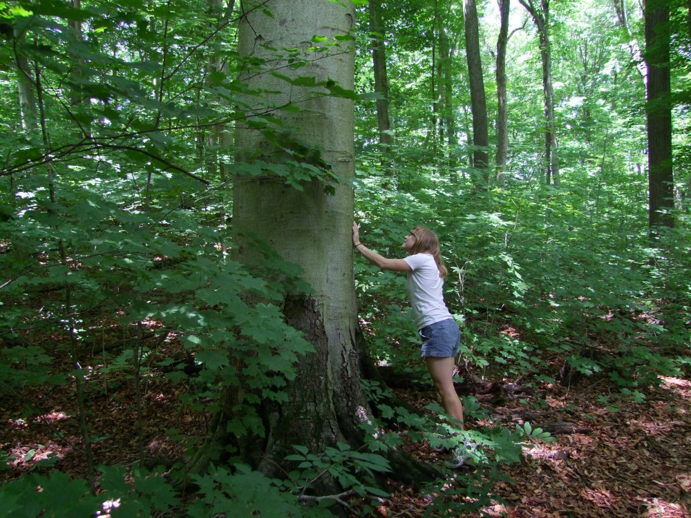 The author sizes up a tree. Photo courtesy of William Van Hemessen.