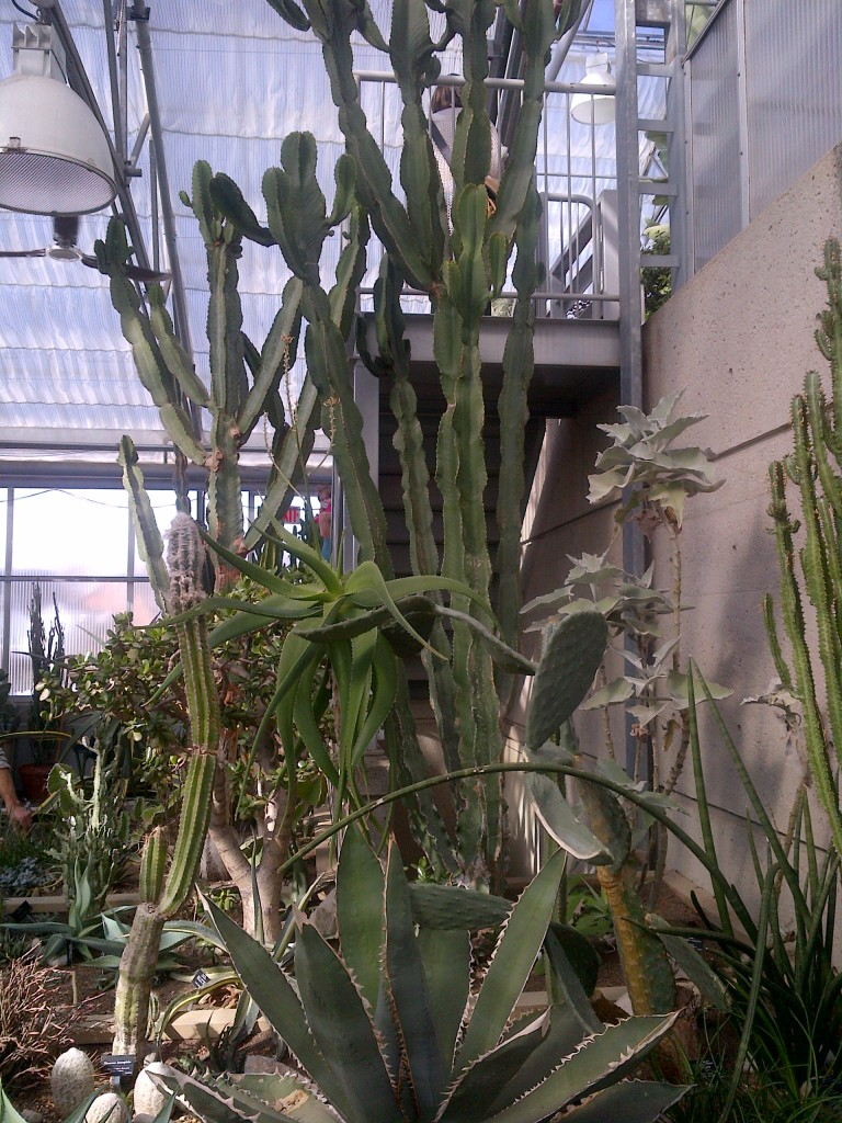 Tall, spiny cacti.