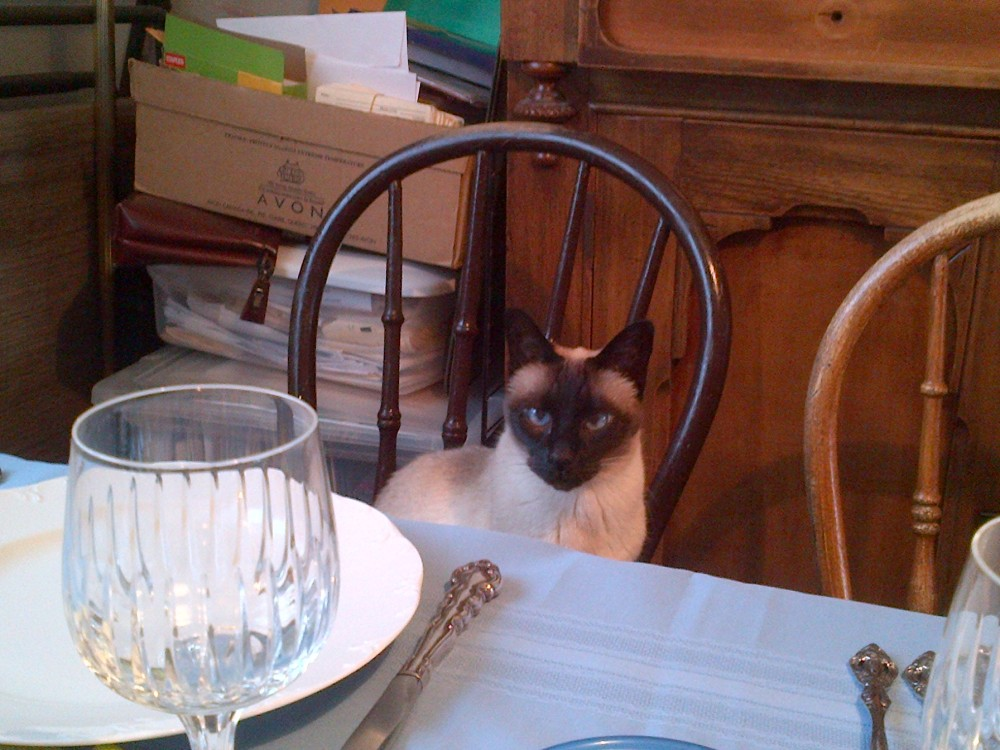 Bamboo awaits her lavish dinner.