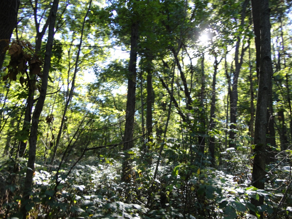 Understory along the trail.