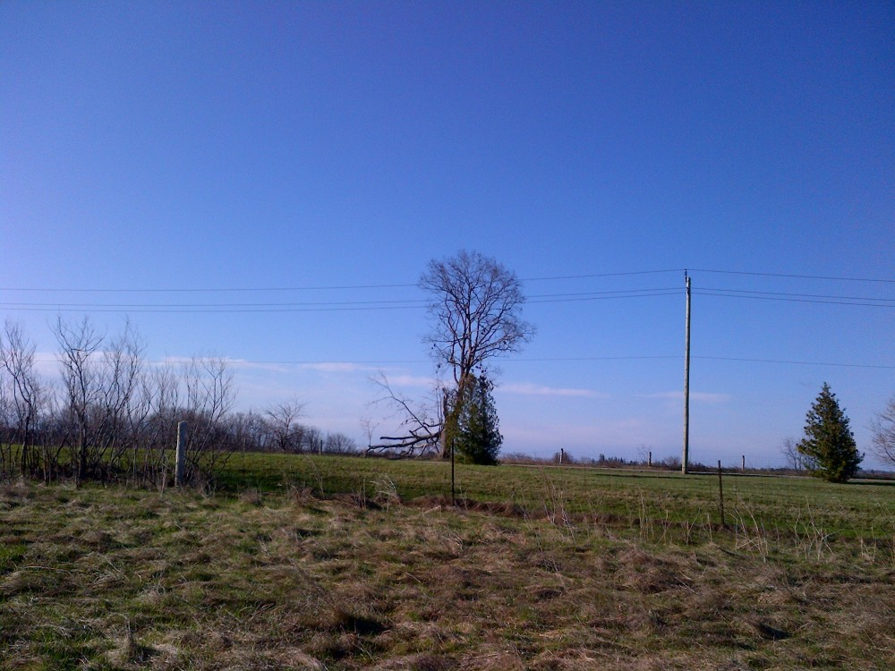 The shoe tree, seen from afar.