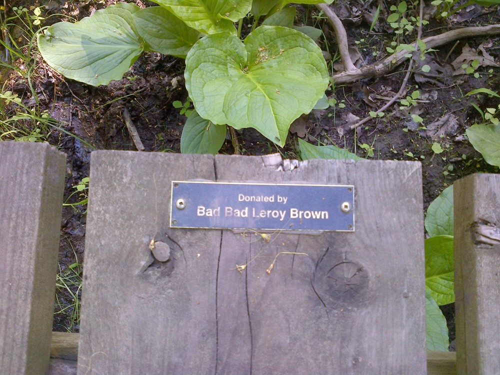 A very musical donor on this section of board walk.