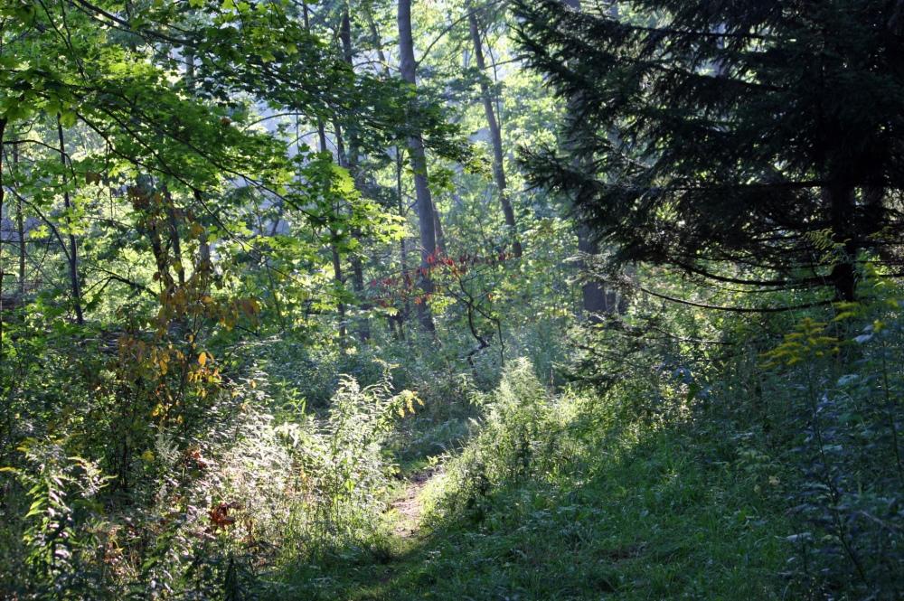 Peeking into the woods.