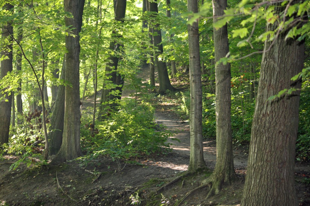 A view of the trails.