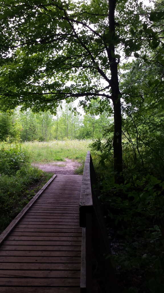 People love this trail - you can tell by the quality of its bridges!