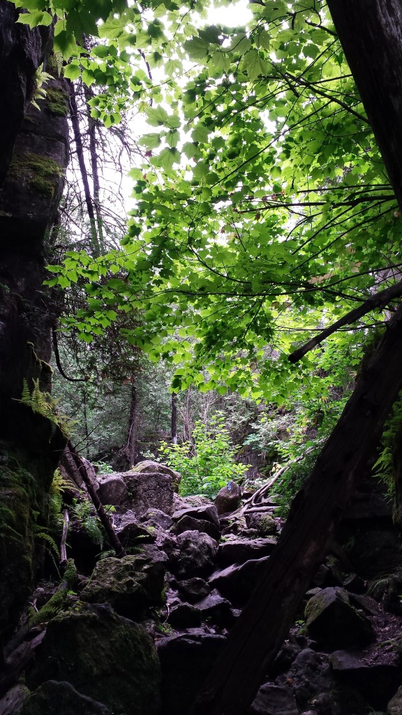 Some beautiful sights along the Metcalfe Crevice Side Trail.