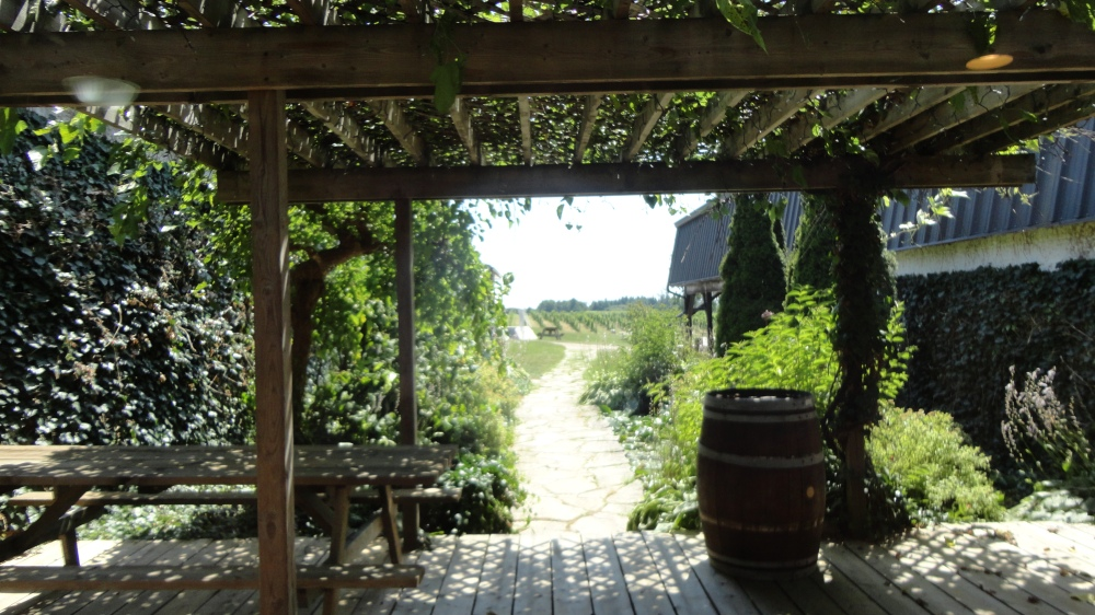 Looking out from the store into the vineyards.